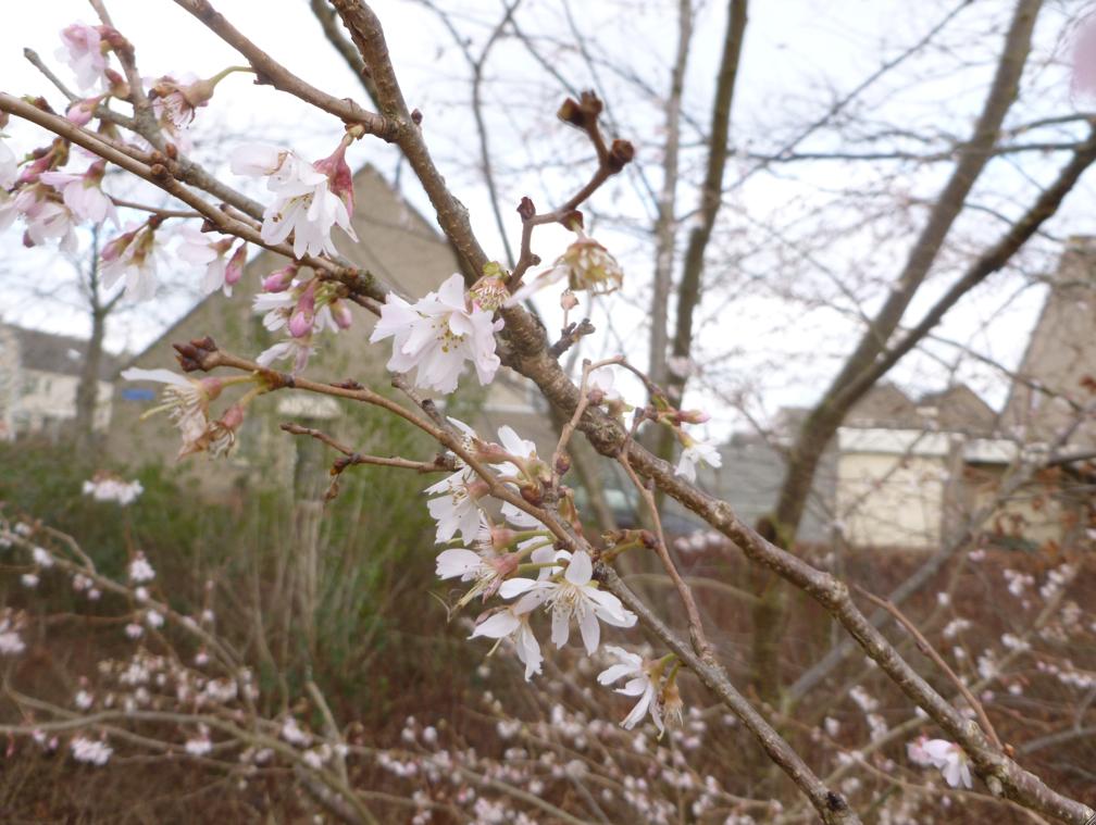 Foto 2014-02-03 07-14-13
